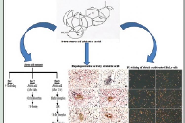 Hepatoprotective and Cytotoxic Activities of Abietic Acid from Isodon wightii (Bentham) H. Hara