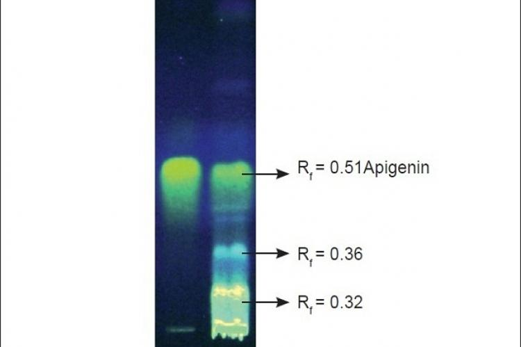Co-TLC of Standard (STD)-apigenin and MEGA showing three fluorescent spots when observed at 254 nm after derivatisation with NP-PEG reagent.